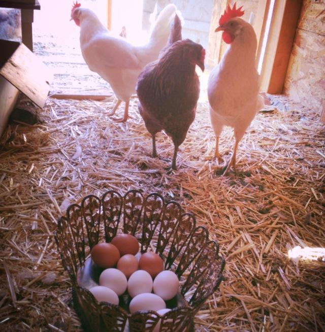Sampat Farm_2