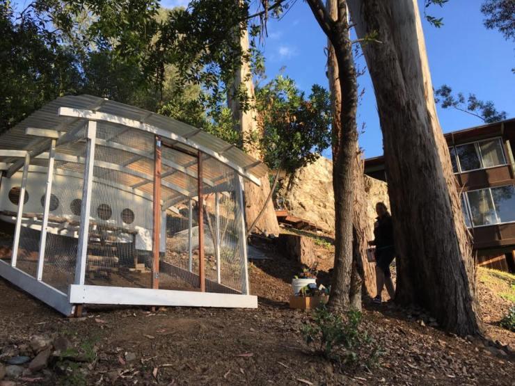 Our mid-century modern coop in Los Gatos